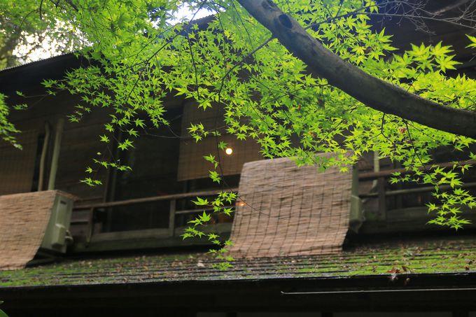 緑に包まれた美しい滝見カフェ「薬膳茶SoybeanFlour at きらら」
