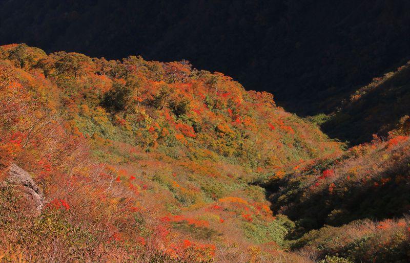 美しすぎる北陸の小京都!福井「越前大野」が魅せる風景のまとめ