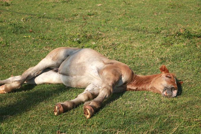 おっ道の上に!悠々自適に暮らす「寒立馬」を愛でよう