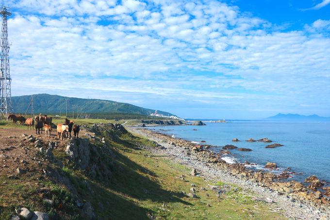 寒立馬と景色のコラボが絶妙!「尻屋崎」独自の景観を味わおう