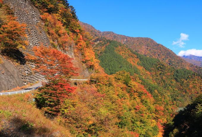 山肌を覆い尽くす!「畑薙第一ダム」から見る紅葉は感動レベル