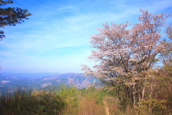 美しき樹氷も!三河山地最高峰「寧比曽岳」