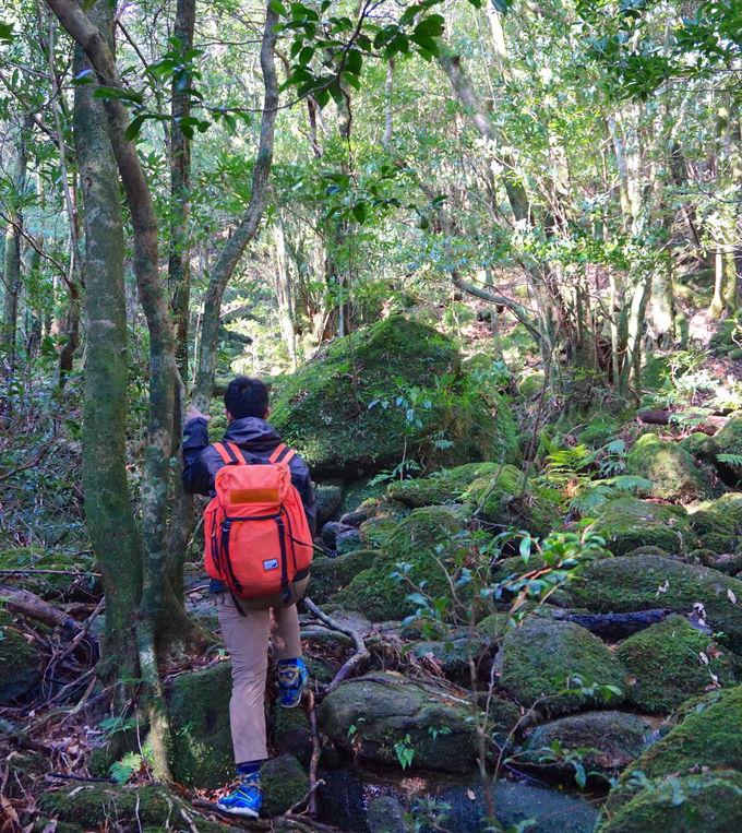 知られざる名山「モッチョム岳」!名瀑から登山開始