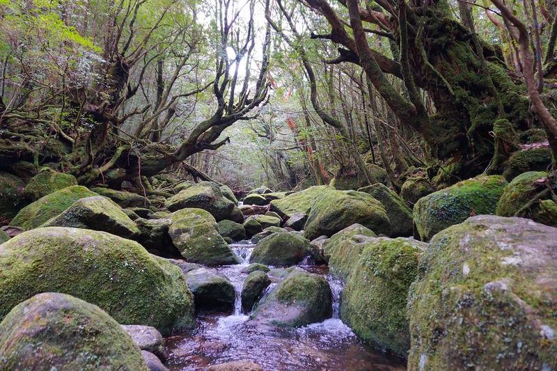 屋久島旅行のおすすめプランは?格安、アクティビティ、一人旅などテーマ別に紹介!