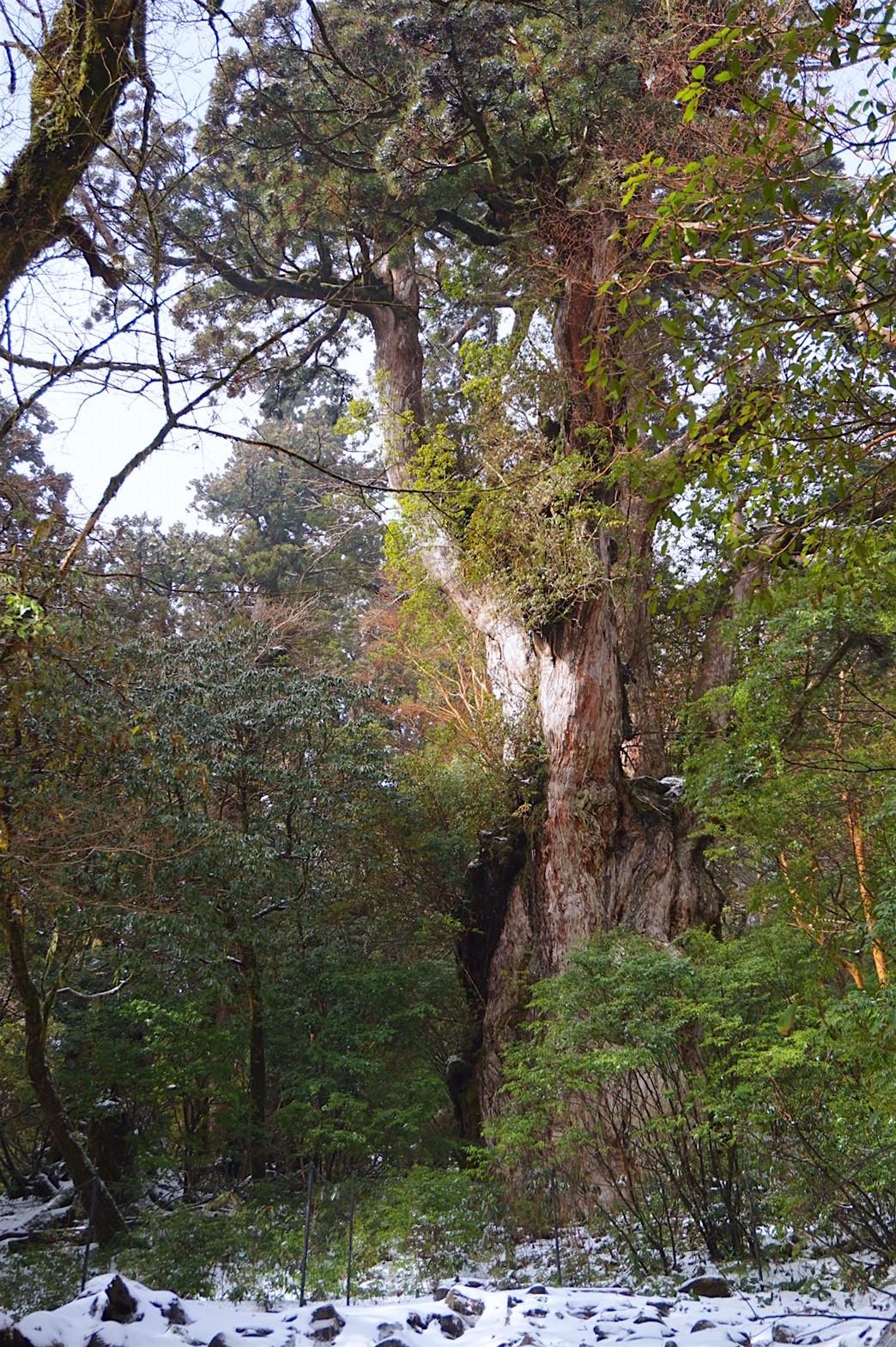 太古の大自然!世界遺産「屋久島」はトレッキングや登山がおすすめ