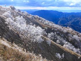 現れた羊の隊列!冬の鈴鹿山脈「竜ヶ岳」の樹氷が美しい