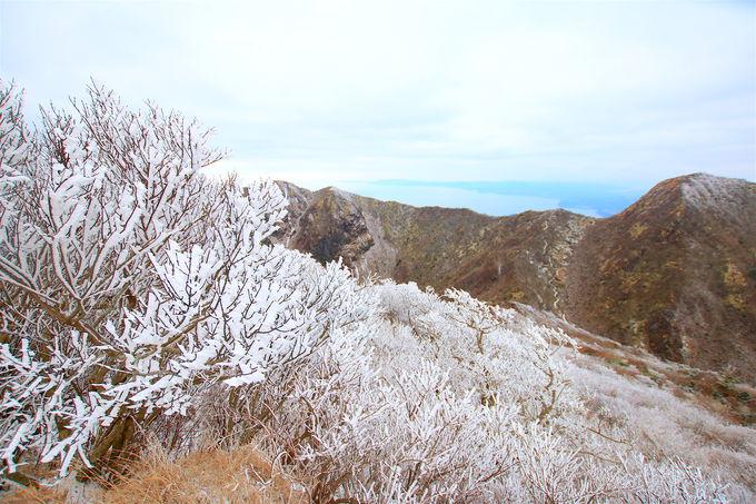 冬に咲く氷の花!美しすぎる「雲仙普賢岳の霧氷」