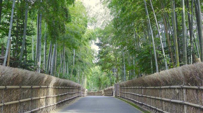 各種日本文化体験も!よりディープな京都旅に