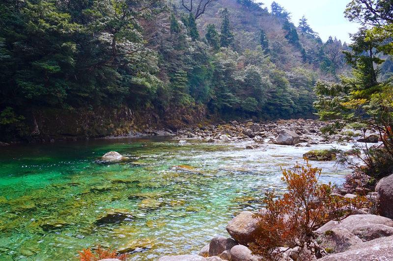 屋久島観光では外せない!荒川登山口から縄文杉トレッキング