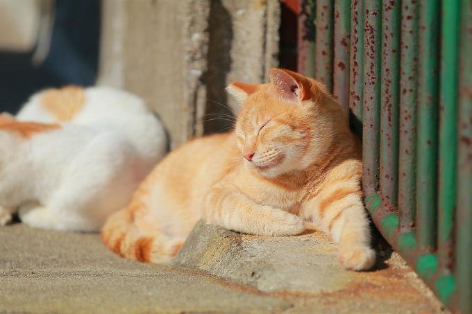 猫に会うには?穏やかな瀬戸内海の離島「男木島」