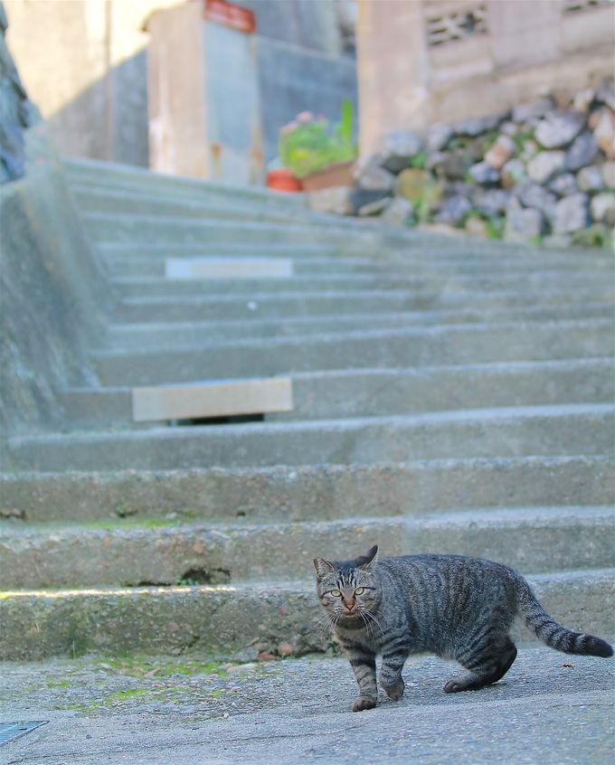 猫がいる場所は二つ!まずはメインストリート