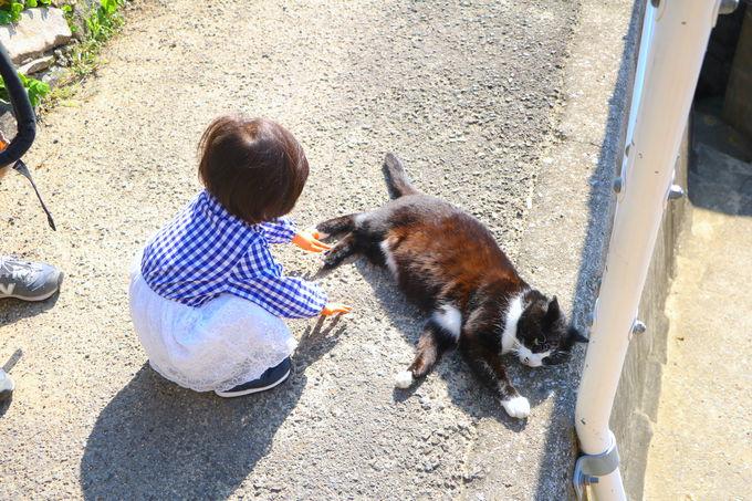 悠々自適な猫たちに癒される!一緒にのんびり「島の時間」
