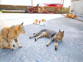 気ままに暮らす猫と戯れる!瀬戸内の猫島「男木島」で癒しの島旅を
