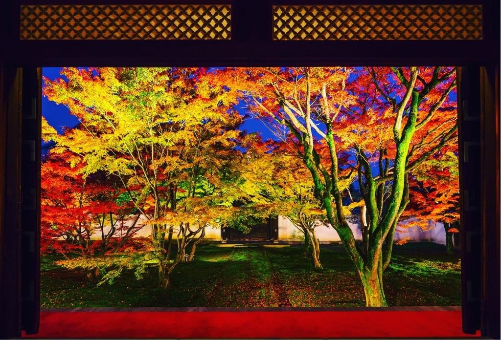 絶景庭園と写真アートのコラボ!京都まるごと美術館「妙覺寺」が凄い | 京都府 | LINEトラベルjp 旅行ガイド