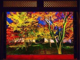 絶景庭園と写真アートのコラボ!京都まるごと美術館「妙覺寺」が凄い