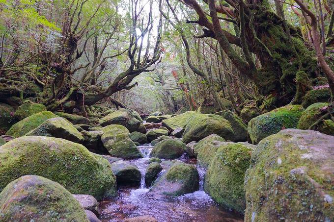 圧倒的な屋久島の自然を堪能!「太鼓岩」の大展望
