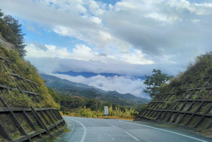 世界遺産の大規模林道!「西部林道」で屋久島の未開に出会う