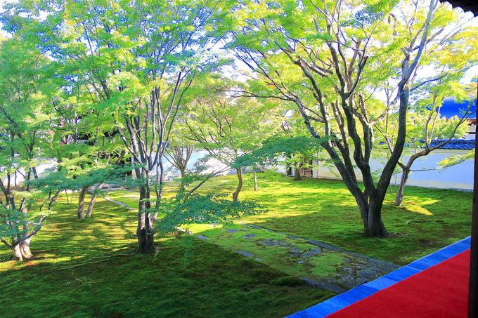 苔とモミジが作る絶景の庭!「妙覺寺」の幻想的なライトアップ