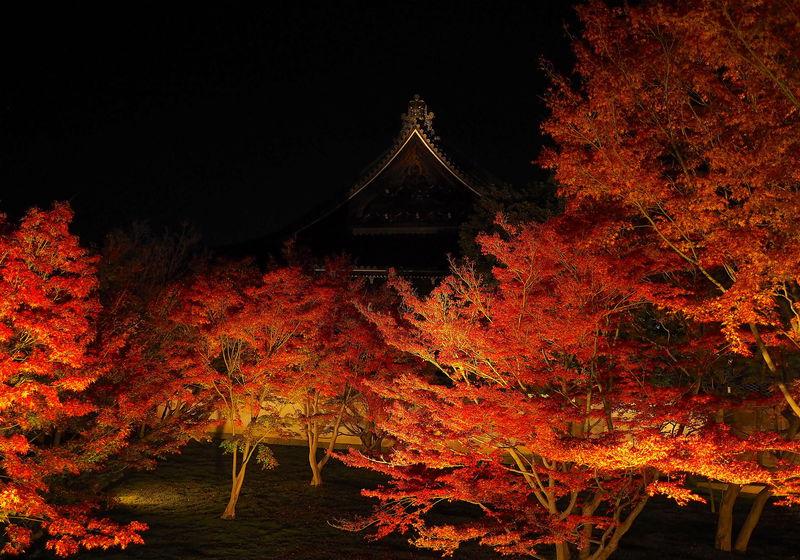 京都「まるごと美術館」2019!絶景の庭園ライトアップを味わおう