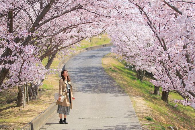 自然景観の素晴らしさが光る!高松と繋がる「池田」美しい公園も