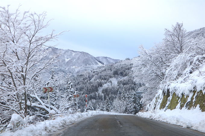 雪山の美しさが凝縮!冬の「山の神林道」が絶景