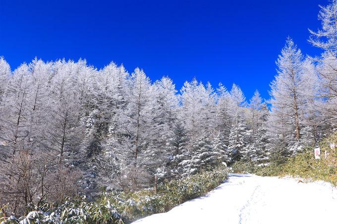 カラマツの樹氷と青空のコラボが美しい!「富士見台高原」の本領