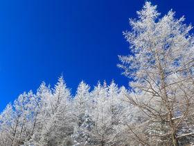 """ロープウェイで""""青空樹氷""""の世界へ!岐阜「富士見台高原」が絶景"""
