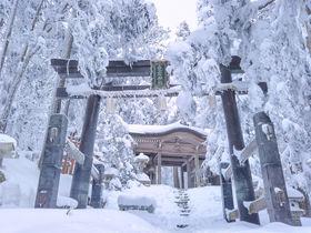 京都「愛宕山」の冬!杉の大樹が凍り付く水墨画の世界