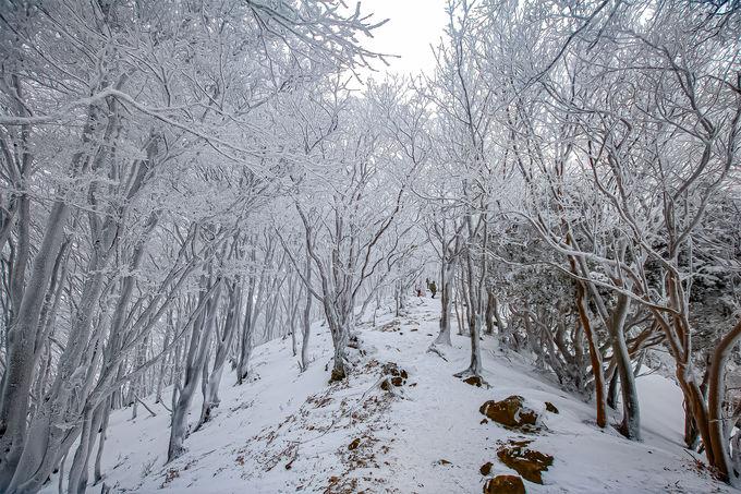 霧氷の登山道へ!荘厳な雪山の世界へ触れよう
