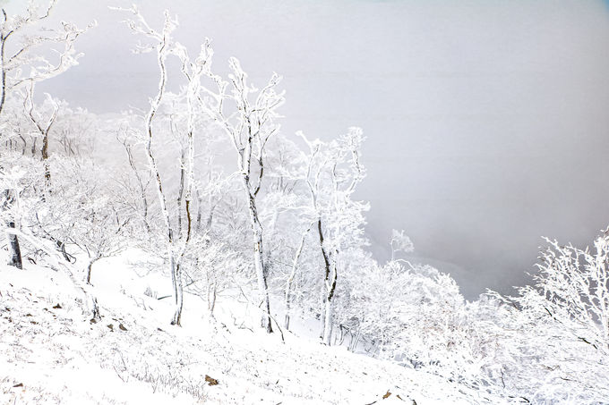 まさに冬に咲く桜!美しすぎる霧氷の絶景を堪能