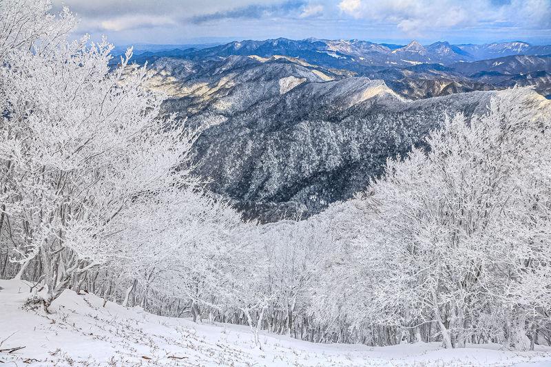 雪山登山は霧氷バスが便利!奈良県吉野「高見山」で霧氷の花見を