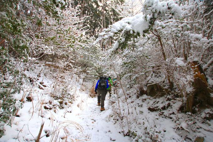 霧氷バスでアクセスがおすすめ!野趣溢れる冬の「高見山」
