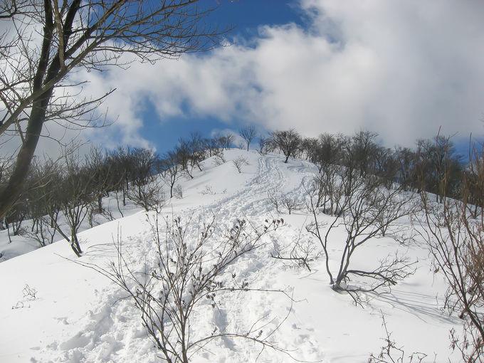 静謐なブナ林を歩く!「蛇谷ヶ峰」