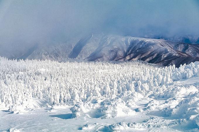 一度は見たい冬の山形の絶景「蔵王の樹氷」