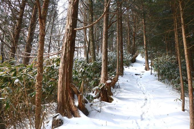 美しい樹林歩きから!南沢山登山は情緒抜群