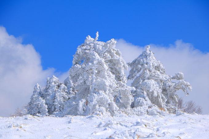 南信の7つの名峰たち!「阿智セブンサミット」が密かに人気