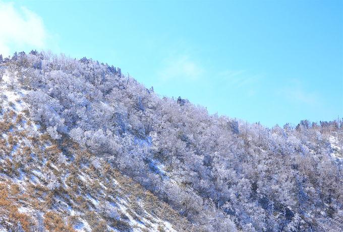 南沢山から横川山の稜線にミニモン登場!阿智の冬の風物詩