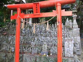 神社境内が猿だらけ?壱岐「男嶽神社」参拝が面白い