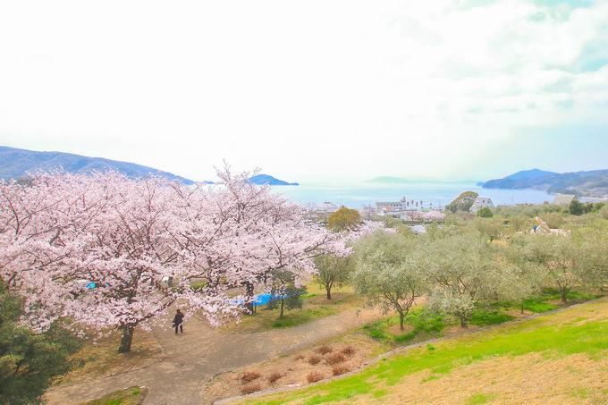 全季節訪れたい!四季折々の魅力で溢れる「小豆島」