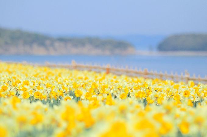 他のお花見スポットも見逃せない!春の小豆島はフォトスポットがいっぱい