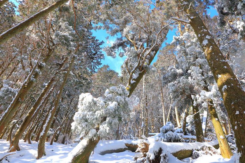 冬は別世界!三重いなべ「藤原岳」絶景雪山ハイキング | 三重県 | LINEトラベルjp 旅行ガイド