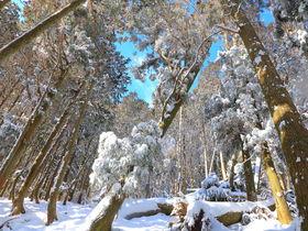 冬は別世界!三重いなべ「藤原岳」絶景雪山ハイキング