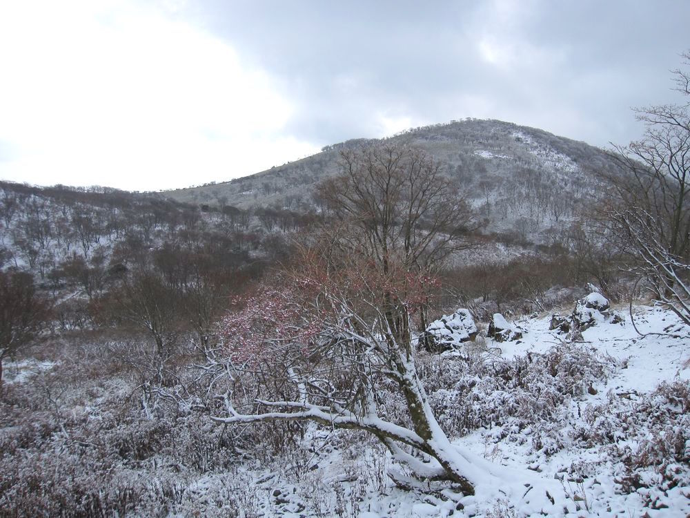 関西ハイカーに人気を誇る花の山「藤原岳」