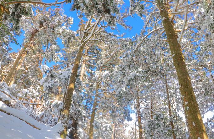 雪を被れば180度変わる景色!「藤原岳」で白銀世界を大冒険