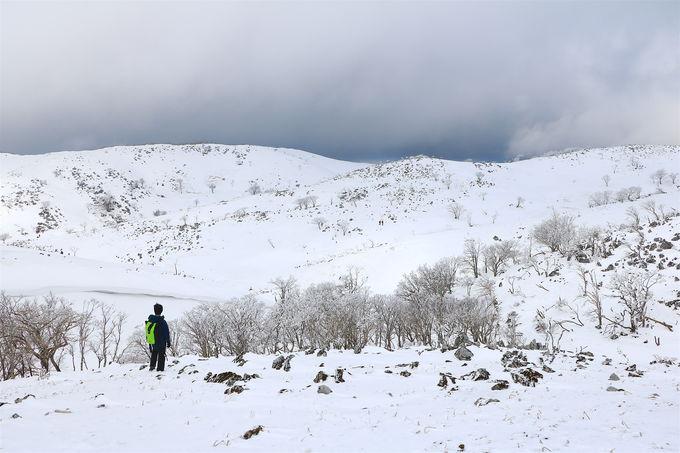 榑ヶ畑登山口から!樹林帯を越えて広がる大雪原が圧倒的
