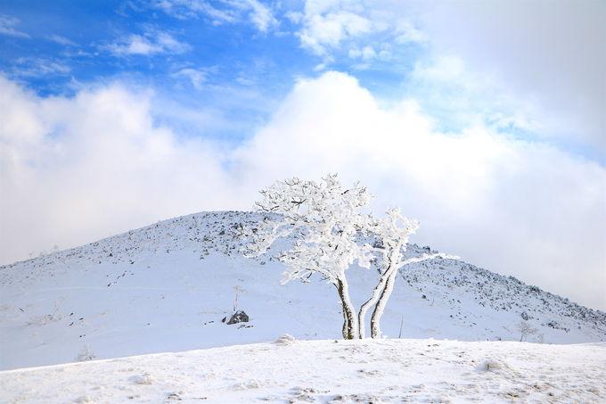 関西一の呼び声高い!「霊仙山」へ雪山登山