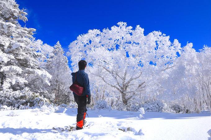 美しい霧氷桜へ会いに行こう!飛騨高山「位山」雪山登山
