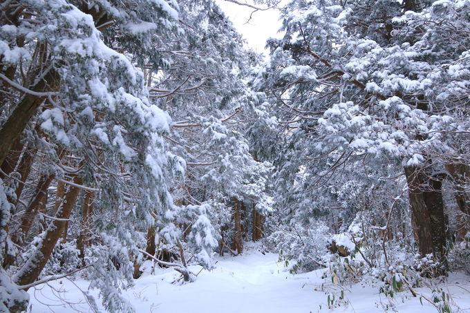 位山登山のルートを詳細解説!霧氷の森を抜けて天の岩戸へ