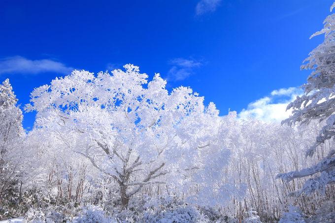 奇跡の絶景!位山「霧氷桜」心洗われる冬の花見を
