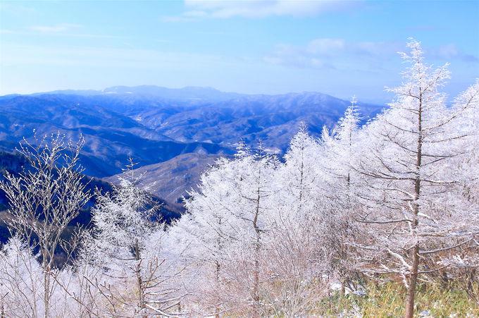 圧倒的な「霧氷」の森が登場!心震わされる美しさ
